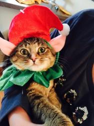 Puddin the elf!