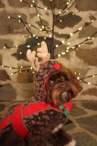 """""""Zsa Zsa says: Santa I have been a good girl."""""""