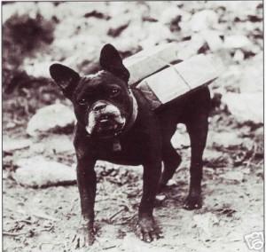 French Bulldog WW1