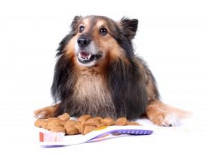 Pet Dental Care