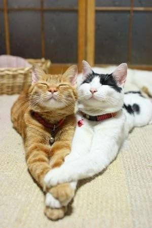 Smiling Cats Holding Hands