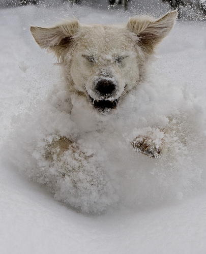 Happy Dog in Snow