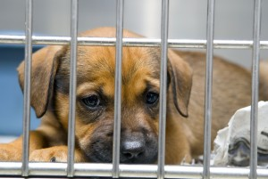 Puppy in a cage at the shelter